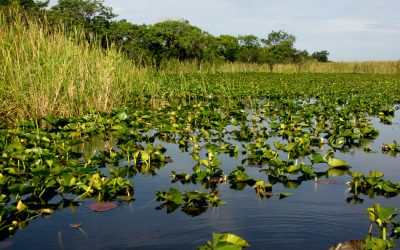 Everglades swamp tours - a pond in the Florida Everglades