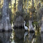 Swamp scenes during a Ft. Lauderdale airboat ride